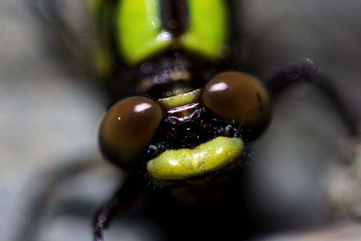 close up of insect face