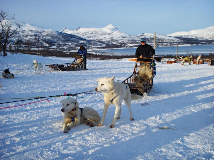 Norway - Tromsø and Dog Sledding