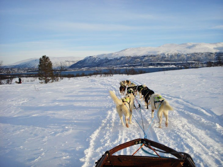 Norway - Tromsø and Dog Sleds