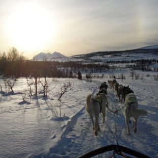 Norway Day 7 – Tromsø and Dog Sleds
