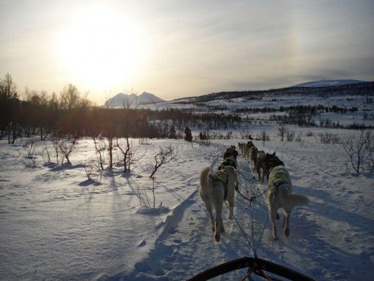 Norway – Tromsø and Dog Sledding