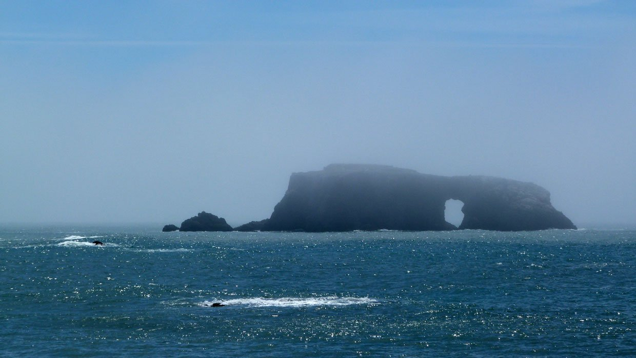 1.-Eerie-scene-at-Goat-Rock-Beach Harbor Seals at Goat Rock Beach, Sonoma County
