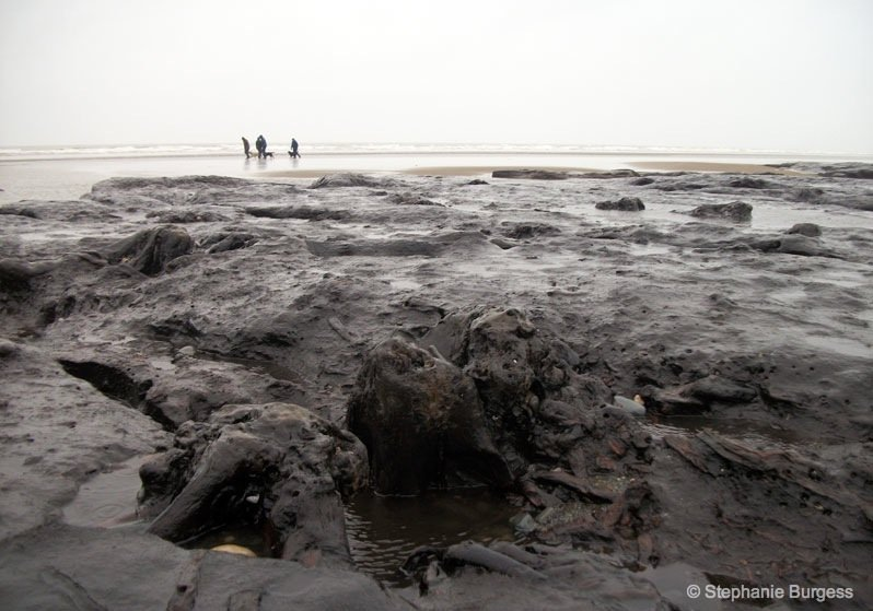 10-wales- The Bronze Age, Submerged Forest, Borth Beach