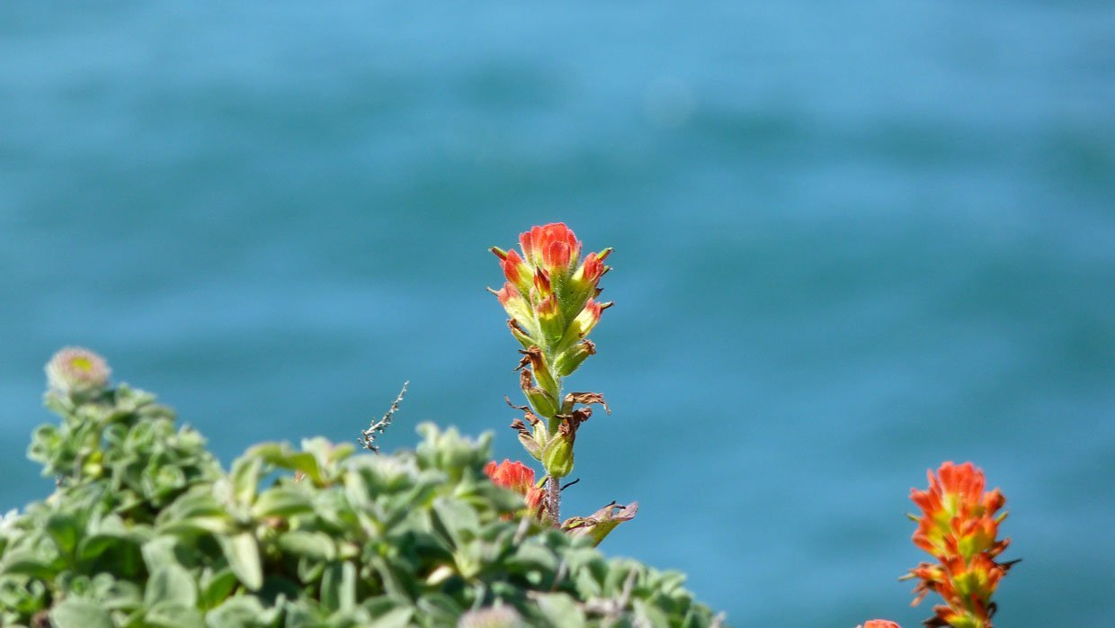11.-More-flora-right-on-the-cliff-edge California – A Trip Out To Bodega Bay