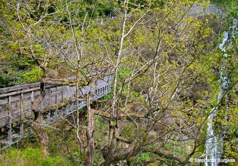 114 Springtime in Pontrhydygroes, Ceredigion
