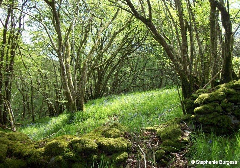 Springtime in Pontrhydygroes, Ceredigion
