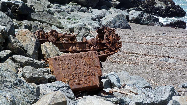12.-Dangerous-coastline Harbor Seals at Goat Rock Beach, Sonoma County