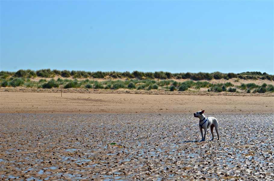 12. Max on the beach- norfolk