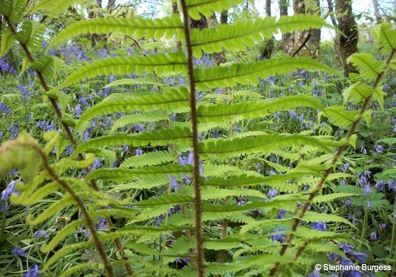 121 Springtime in Pontrhydygroes, Ceredigion