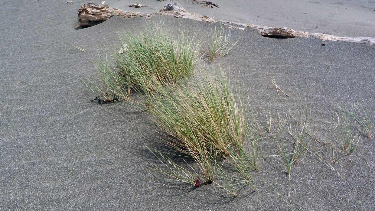 13.-Windswept-grasses-on-the-beach