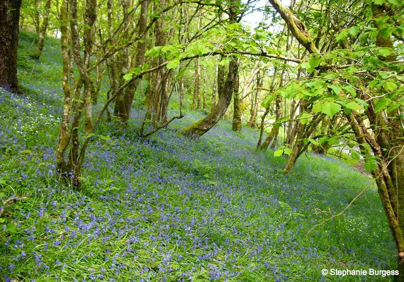 Springtime in Pontrhydygroes, Ceredigion,Wales