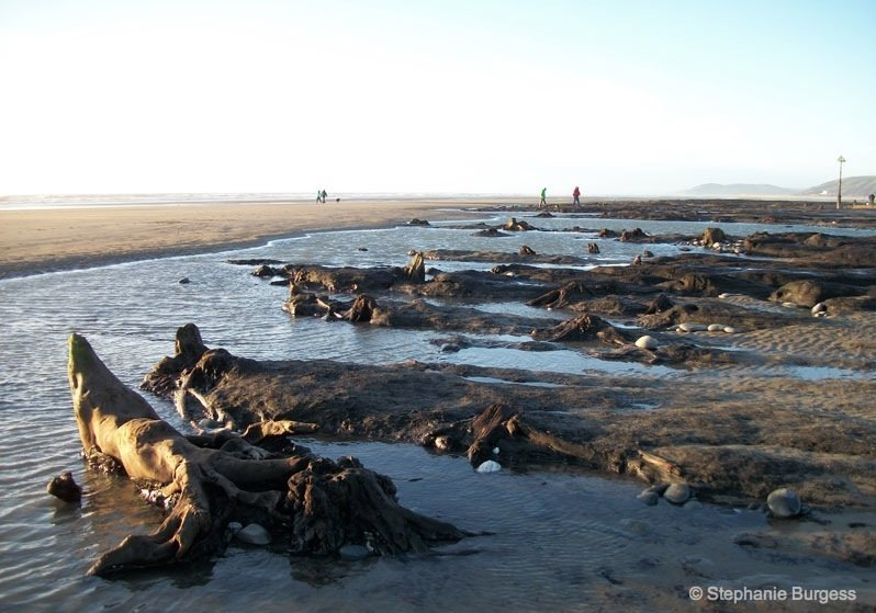 14-wales- The Bronze Age, Submerged Forest, Borth Beach