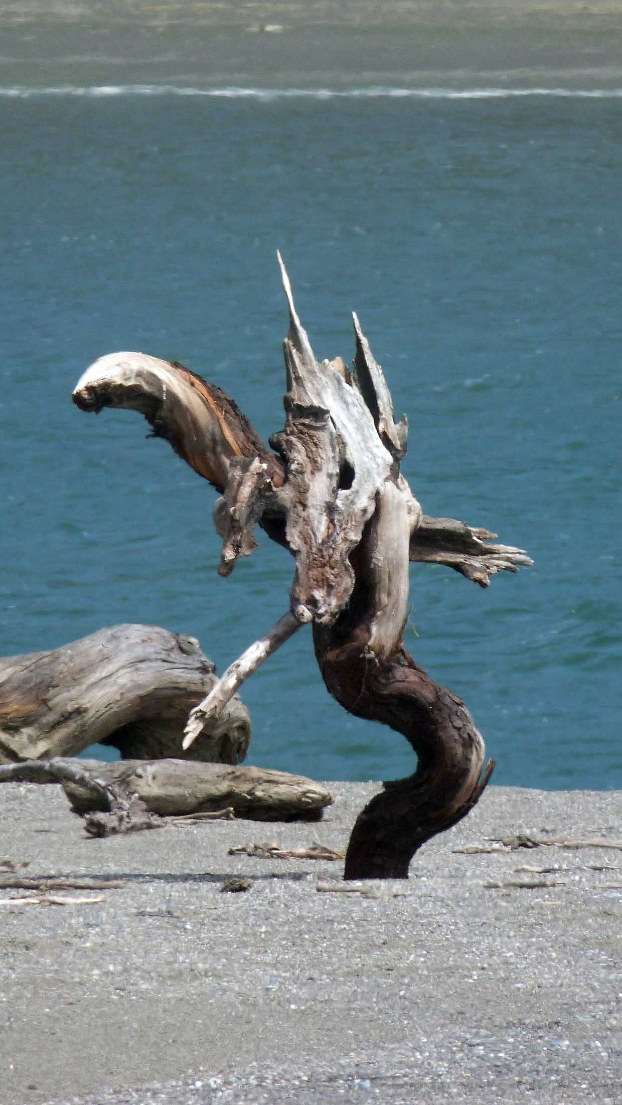 14.-A-unicorn-horse-dragon-...-no-just-wood Harbor Seals at Goat Rock Beach, Sonoma County