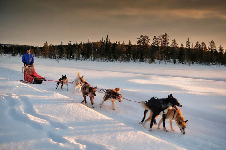 Norway – Husky Sledding Through Rondane National Park