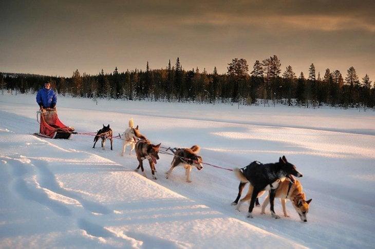 Norway – Husky Sledding Through Rondane National Park 1