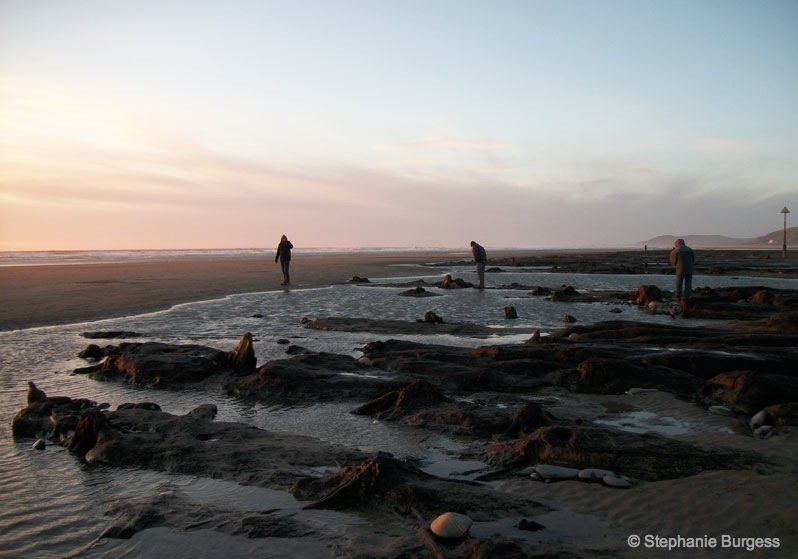 18-wales- The Bronze Age, Submerged Forest, Borth Beach