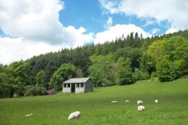 2- Wales