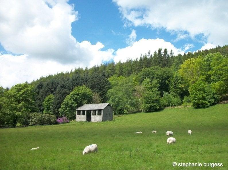 Four Seasons at the Hafod Estate, Pontrhydygroes 1