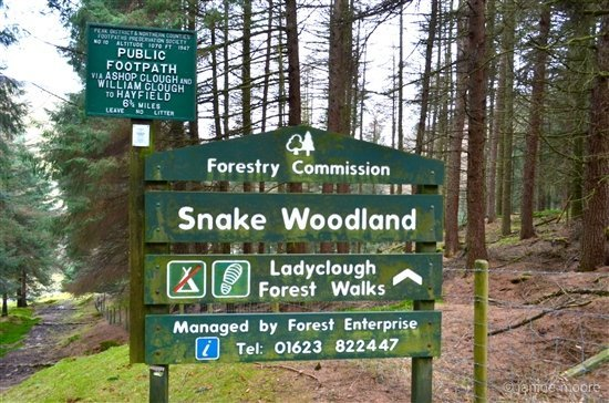 2-snake-woodland-derbyshire Wanders around Snake Pass