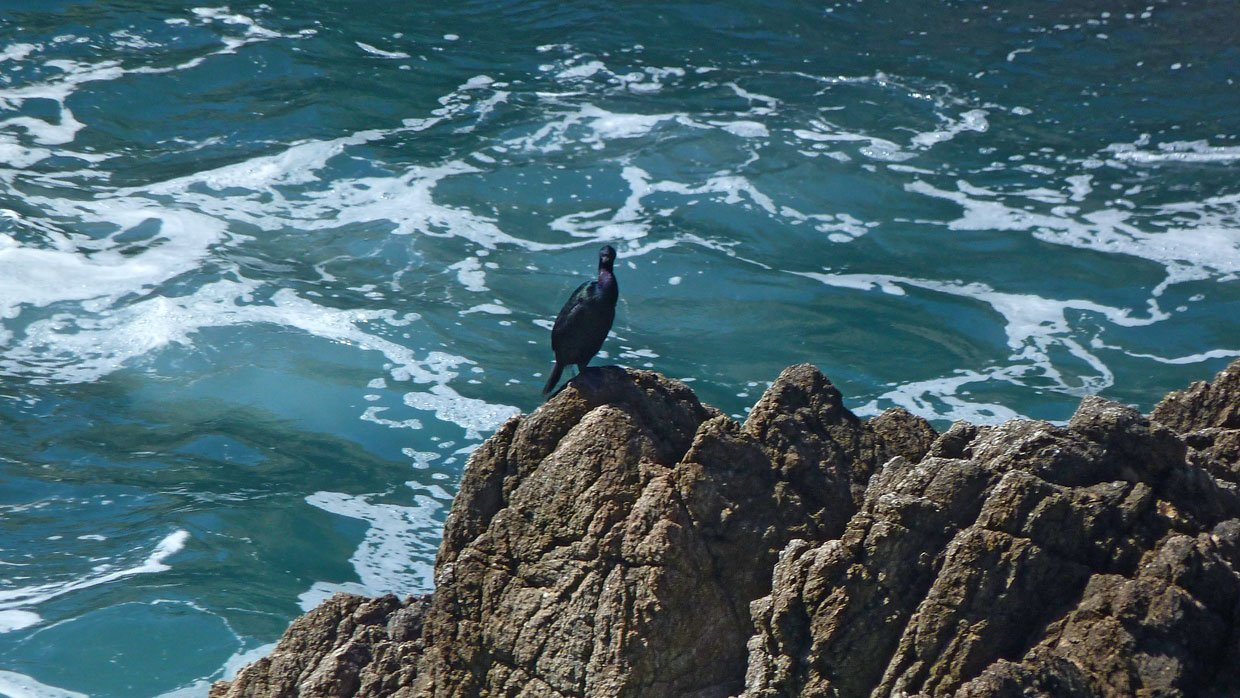 2.-A-lone-cormorant California – A Trip Out To Bodega Bay