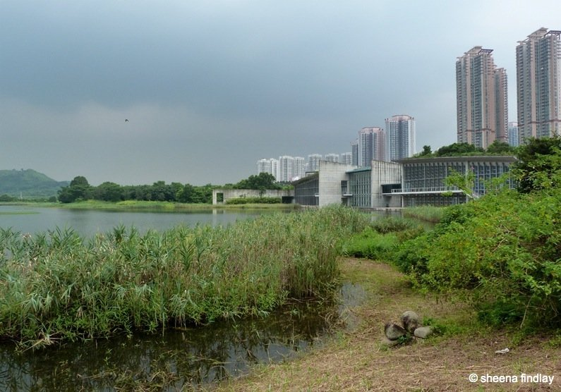2.-The-high-rise-flats The Wetland Park, Hong Kong