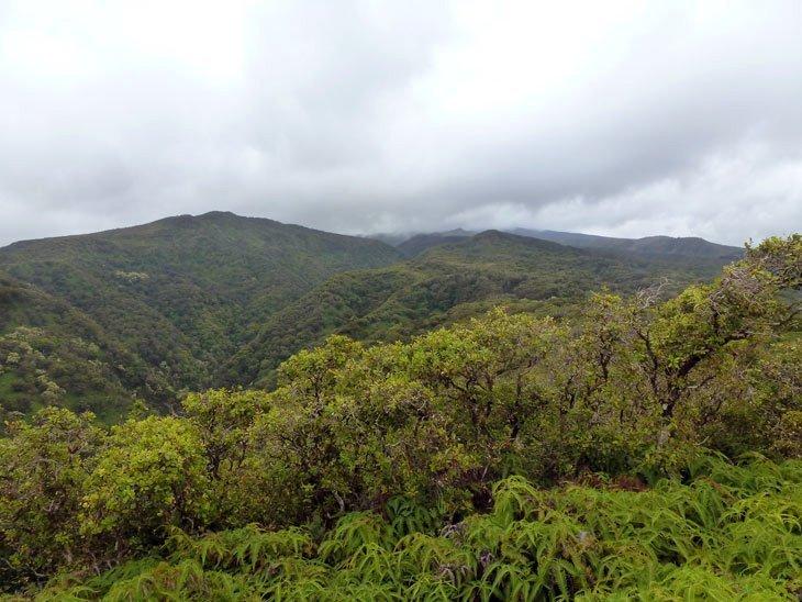 Maui – Hiking The Lush Green of The Mahana and Honolua Ridges