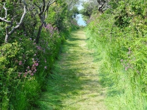 Taking a lush walk through middle of Sark :) happy Friday