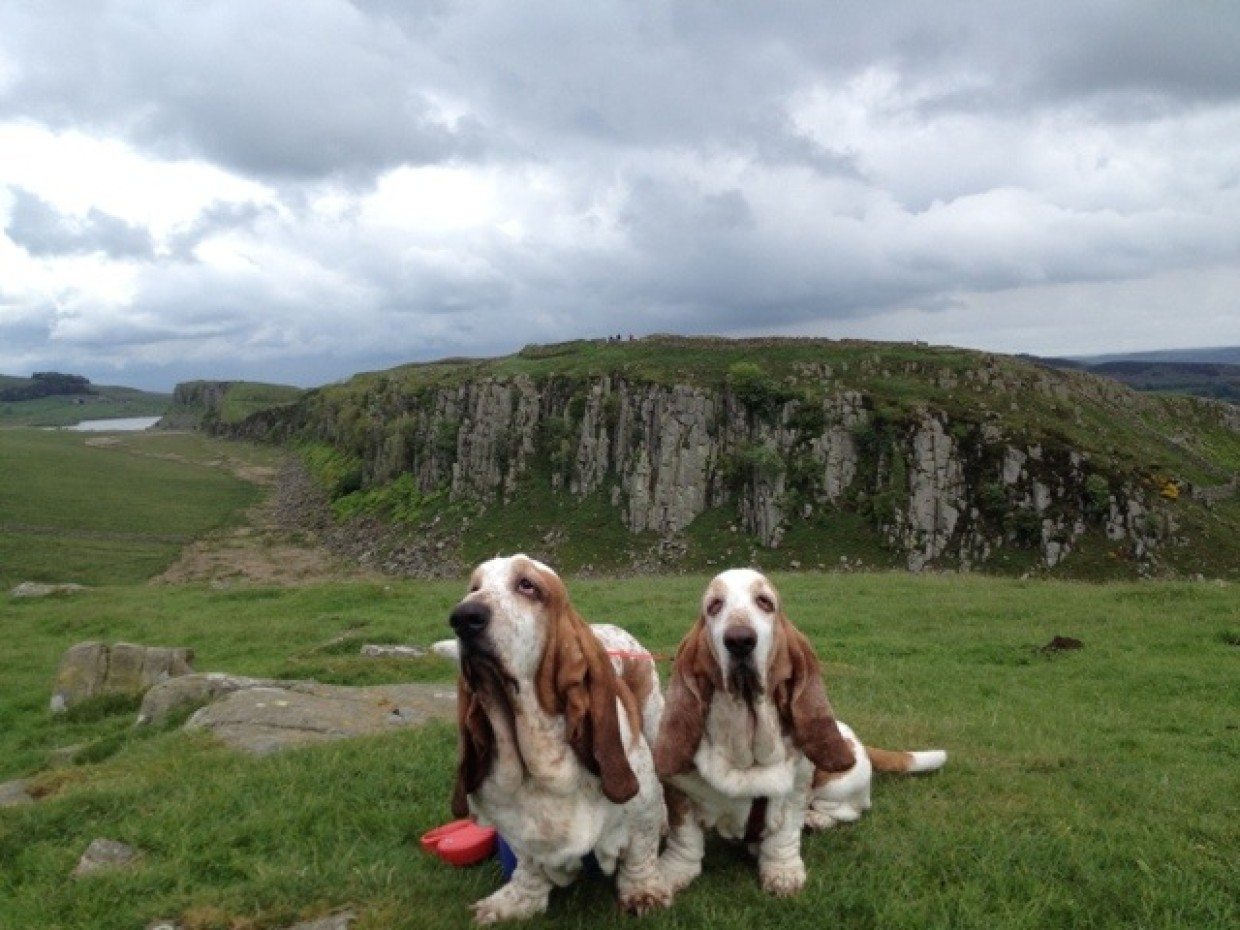 Good afternoon from Steel Rigg Viewpoint… Woof :D