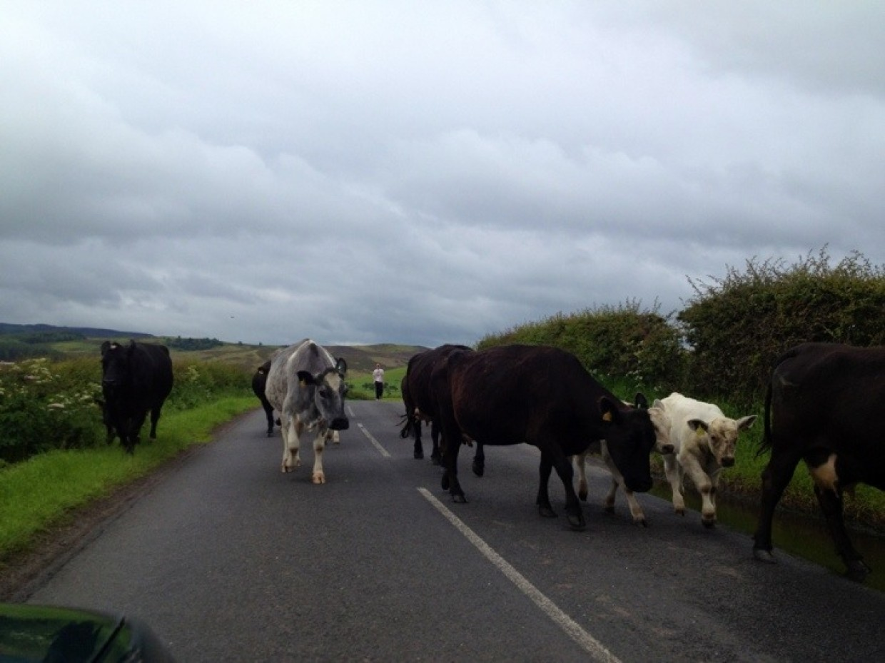 Good morning from Northumberland.. Just been stuck in *heavy* traffic again :)