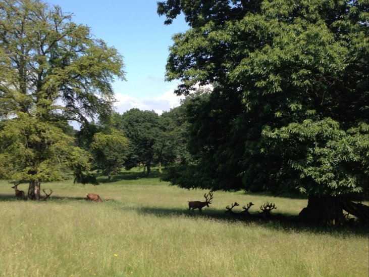 Chill o'clock for the deer :) #TattonPark