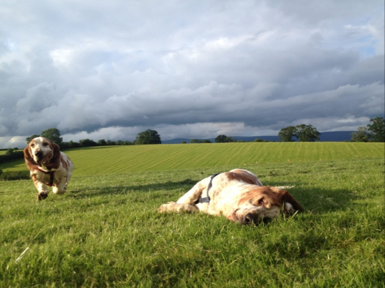 Home and 'playtime' for Monty and Jasmine :D