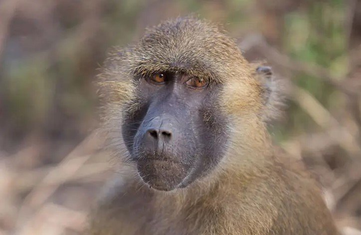 Gambia – Baboons and Birds