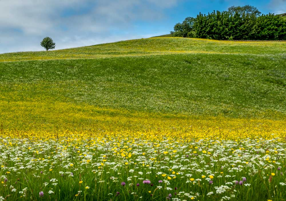 muker meadows in bloom