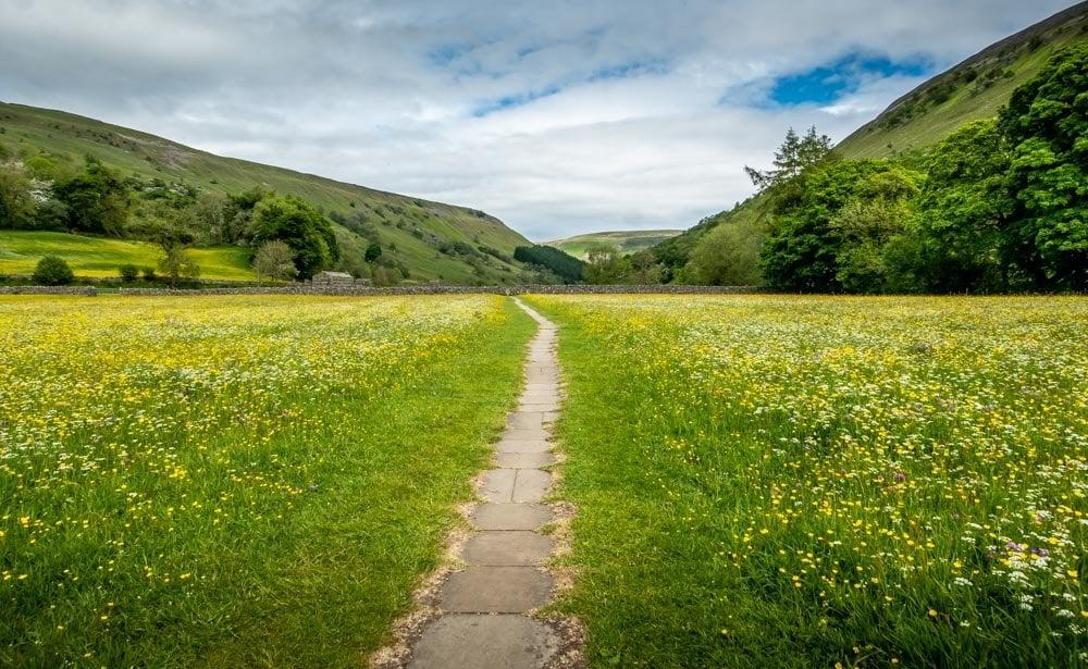 path through the meadows