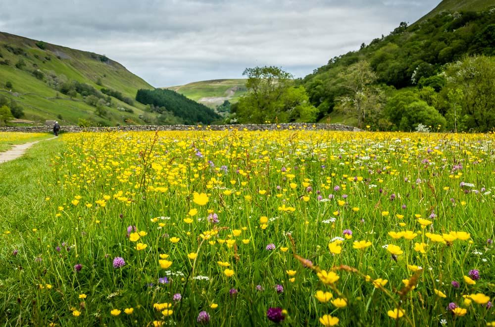wildflowers in muker meadow