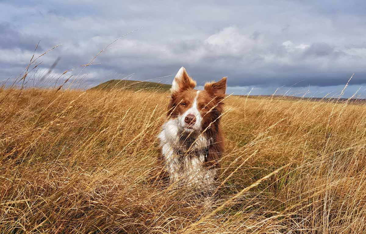 20171003_113114-01 Adventures With Rusty, The Border Collie