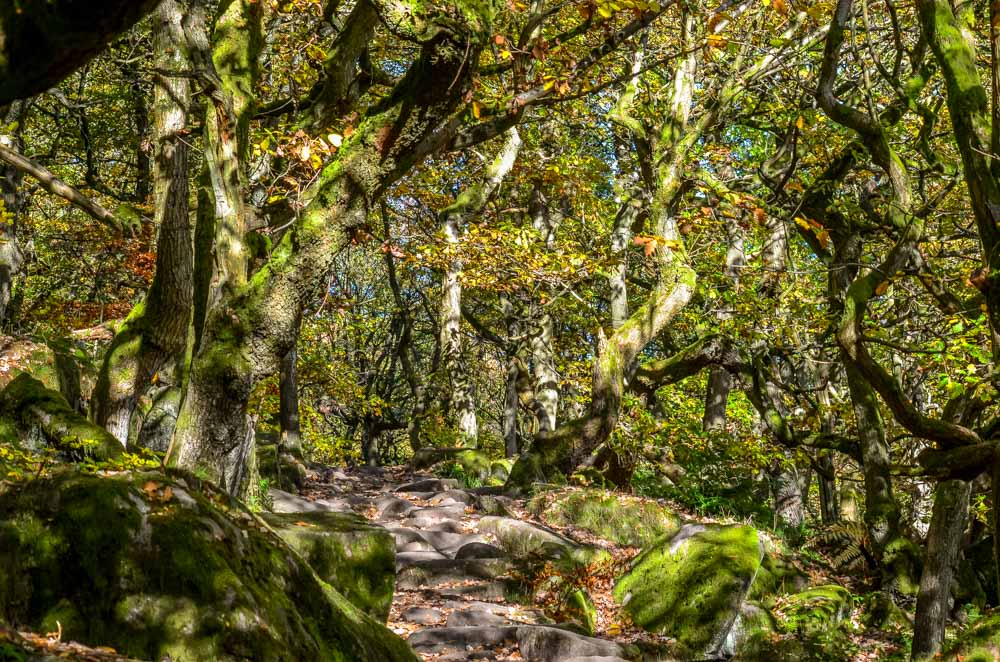 Ancient-woodland_ Walks Beside Burbage Brook and Padley Gorge - Peak District