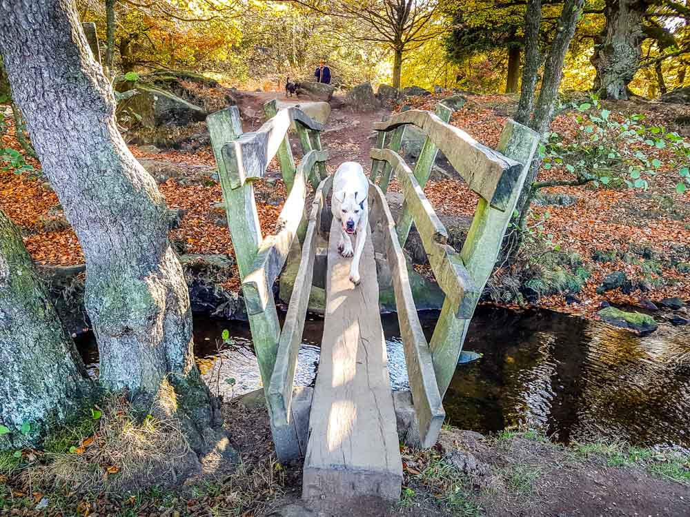 Max-crossing-over-Burbage-brook_ Walks Beside Burbage Brook and Padley Gorge - Peak District