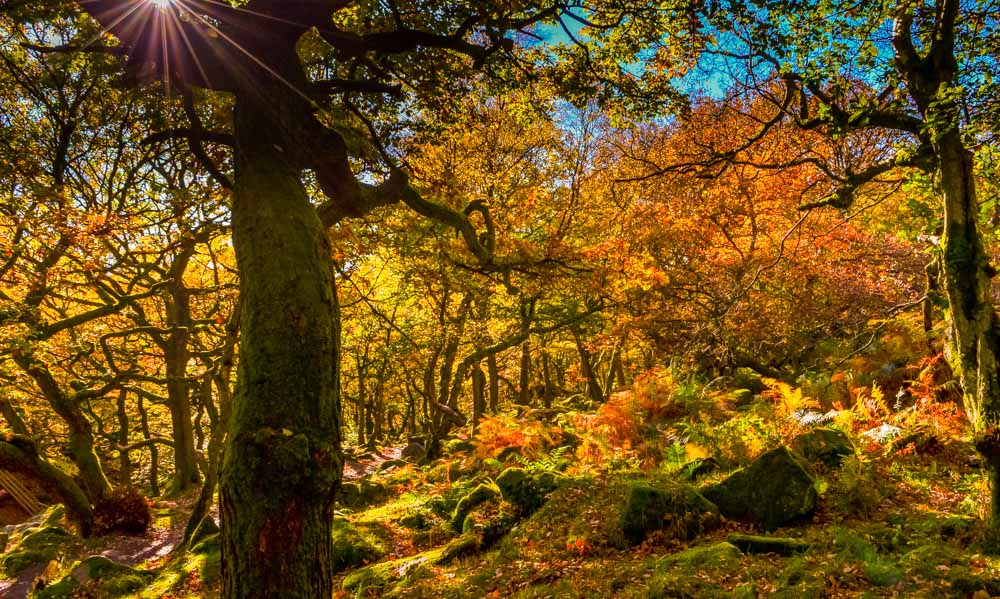 Sun-burst-through-the-woods_ Walks Beside Burbage Brook and Padley Gorge - Peak District