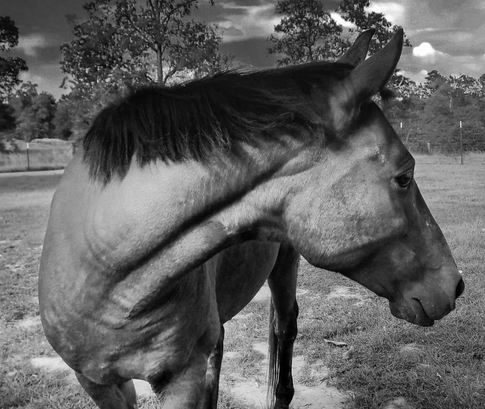 The Love of Horses in Mississippi 1