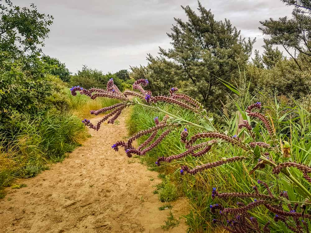 Sand-dunes-at-the-French-Belgian-border Walking in Belgium – De Panne Beach Sunsets and Horses