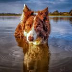 Adventures With Rusty, The Border Collie