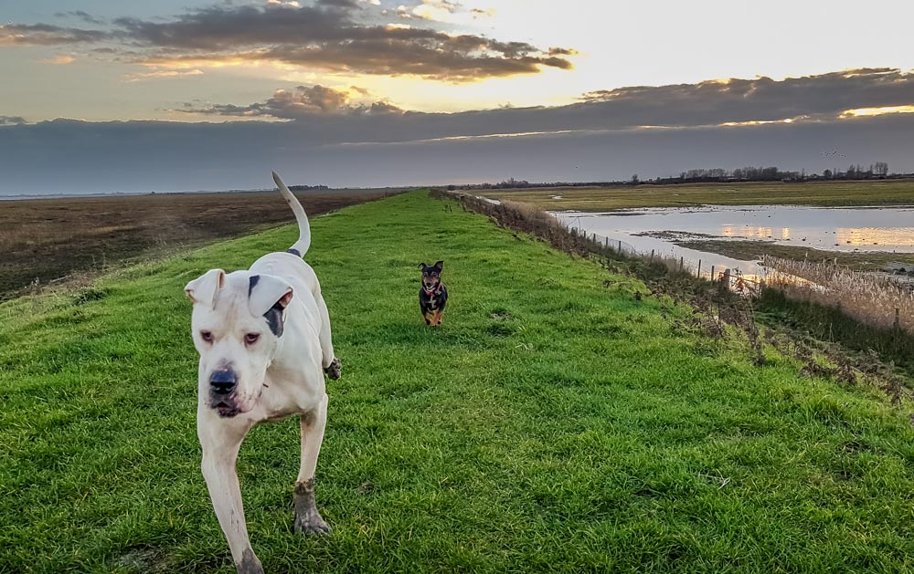 Dogs-stay-close-on-the-sea-bank An Evening Walk at RSPB's Freiston Shore Nature Reserve