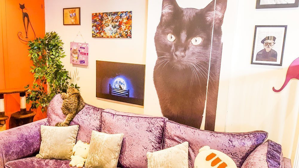 Comfy-seating-area_ Kitty Café - A Feline Experience in Nottingham