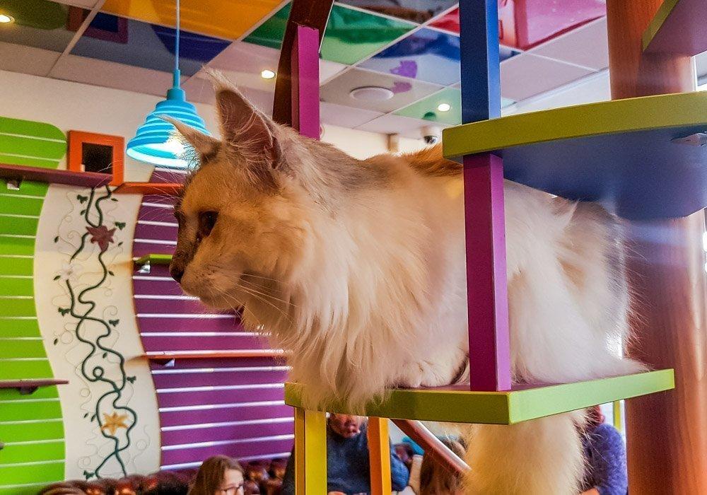 Kitty Café - A Feline Experience in Nottingham