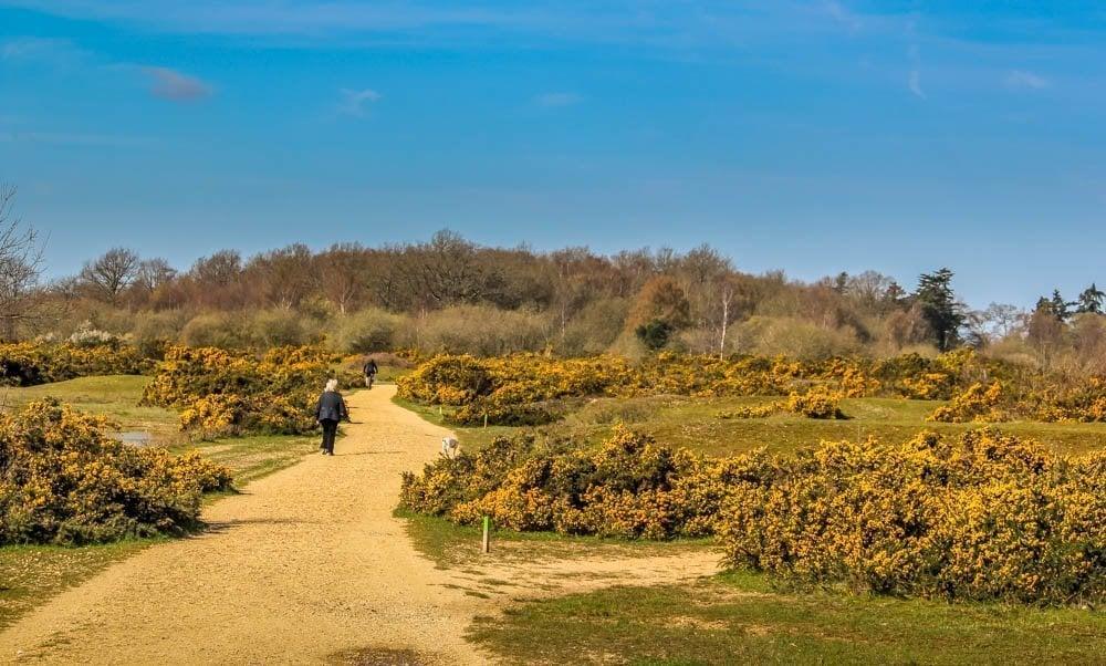 A Walk Around Greenham and Crookham Common, Berkshire
