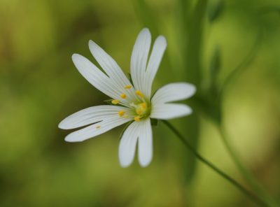 The Wonder of Wild Flowers