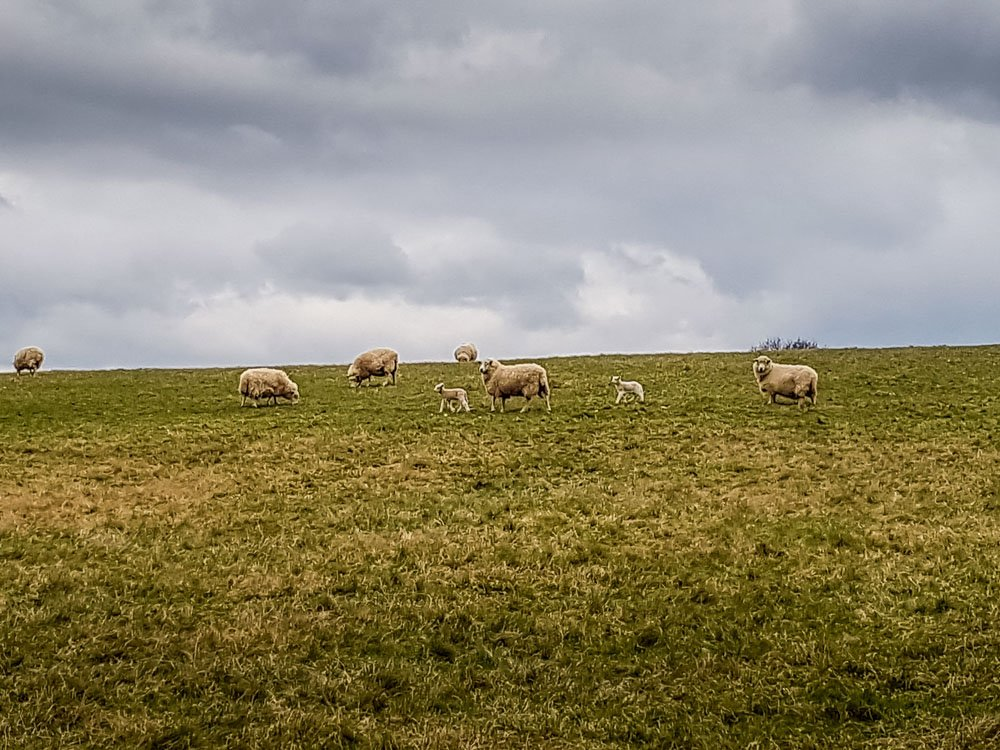 Sheep-Pasture-Ticknall_ Historic Ticknall Village, A Country Ramble –  South Derbyshire