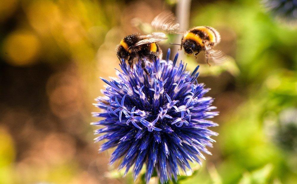 ways to help bees