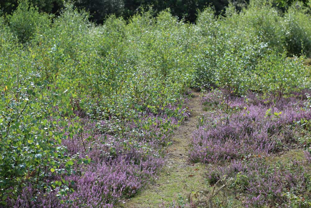 IMG_7058 A Walk Around Snelsmore Common, Berkshire
